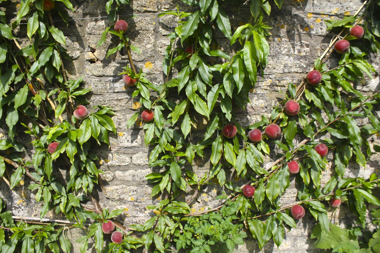 Grounded Magazine - My Tiny Orchard - Gill Carson