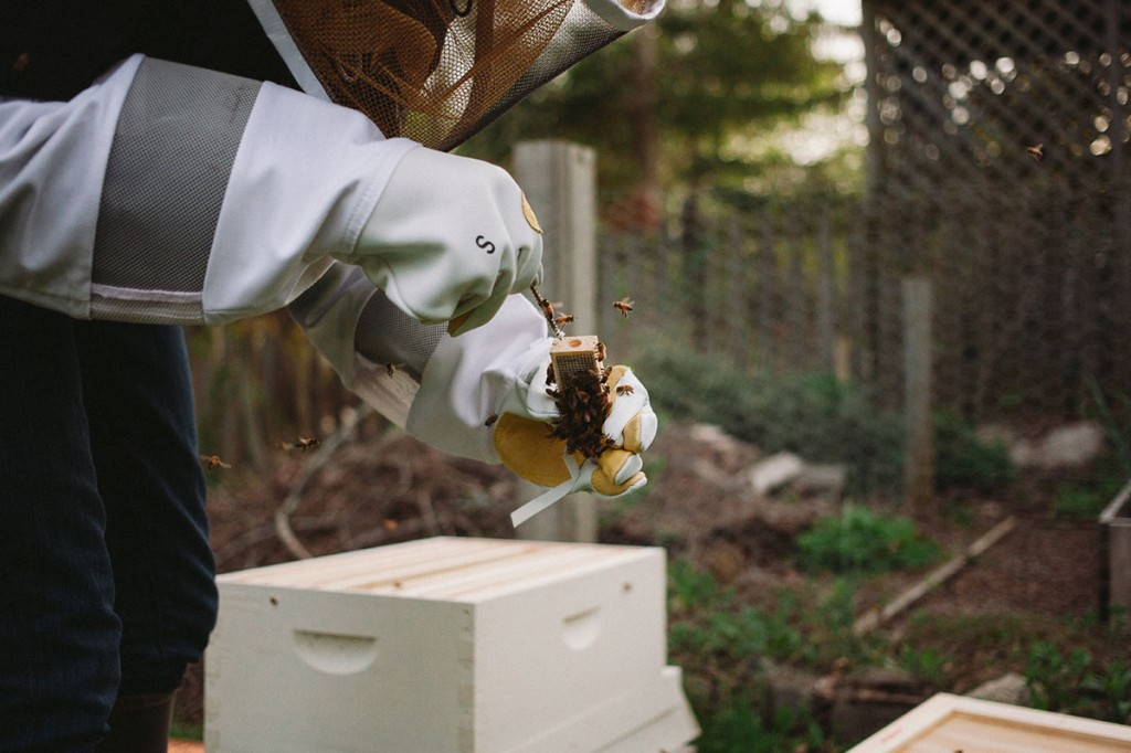 beekeeping-with-baby-3